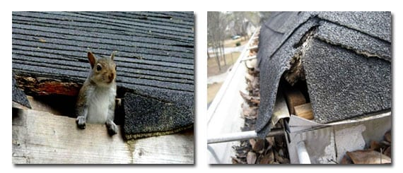 roofing problems and solutions